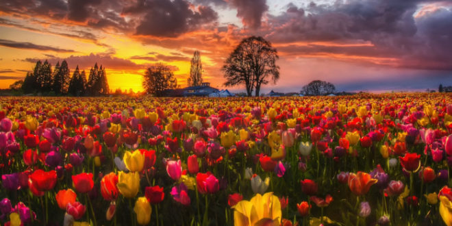 Die Gärten der Liebe – Teil 5